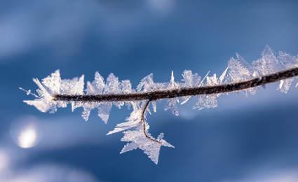 Entro la prima metà di marzo la seconda ondata di gelo